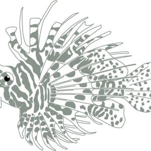 Fish@4x